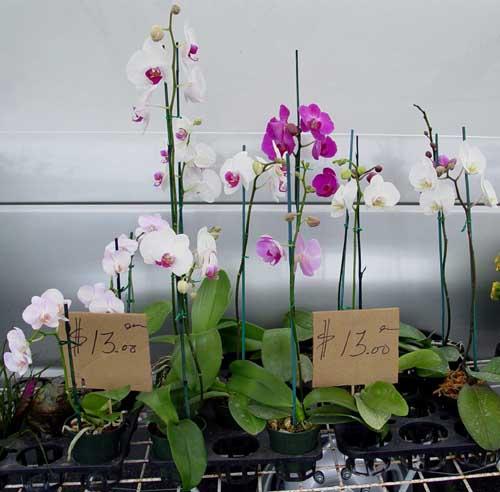 Farmer's Market Orchids