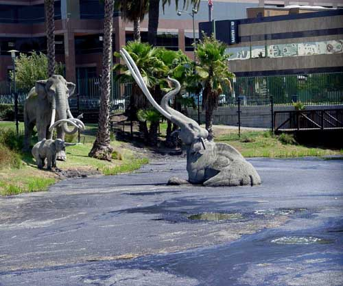 Mammoth Stuck In La Brea Tar Pits